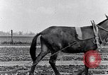 Image of mule drawn plow South Carolina United States USA, 1936, second 34 stock footage video 65675031579
