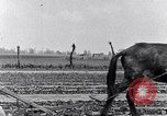 Image of mule drawn plow South Carolina United States USA, 1936, second 35 stock footage video 65675031579