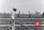 Image of mule drawn plow South Carolina United States USA, 1936, second 36 stock footage video 65675031579