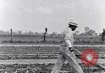 Image of mule drawn plow South Carolina United States USA, 1936, second 37 stock footage video 65675031579