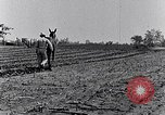 Image of mule drawn plow South Carolina United States USA, 1936, second 39 stock footage video 65675031579