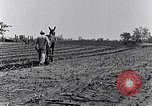 Image of mule drawn plow South Carolina United States USA, 1936, second 40 stock footage video 65675031579