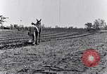 Image of mule drawn plow South Carolina United States USA, 1936, second 41 stock footage video 65675031579