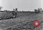 Image of mule drawn plow South Carolina United States USA, 1936, second 42 stock footage video 65675031579