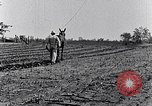 Image of mule drawn plow South Carolina United States USA, 1936, second 43 stock footage video 65675031579