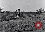 Image of mule drawn plow South Carolina United States USA, 1936, second 44 stock footage video 65675031579