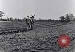 Image of mule drawn plow South Carolina United States USA, 1936, second 45 stock footage video 65675031579