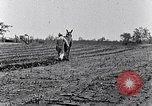 Image of mule drawn plow South Carolina United States USA, 1936, second 46 stock footage video 65675031579