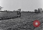 Image of mule drawn plow South Carolina United States USA, 1936, second 47 stock footage video 65675031579