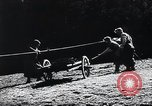 Image of Agricultural practices Germany, 1944, second 12 stock footage video 65675031597