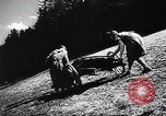 Image of Agricultural practices Germany, 1944, second 21 stock footage video 65675031597
