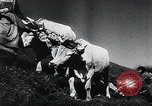 Image of Agricultural practices Germany, 1944, second 29 stock footage video 65675031597