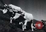 Image of Agricultural practices Germany, 1944, second 30 stock footage video 65675031597