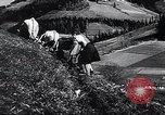 Image of Agricultural practices Germany, 1944, second 36 stock footage video 65675031597
