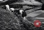 Image of Agricultural practices Germany, 1944, second 38 stock footage video 65675031597