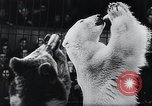 Image of German Circus during World War 2 Germany, 1944, second 9 stock footage video 65675031599