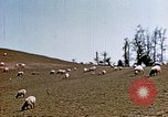 Image of Monticello Charlottesville Virginia USA, 1944, second 10 stock footage video 65675031619