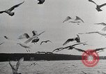 Image of American planes Northern California United States USA, 1945, second 13 stock footage video 65675031725
