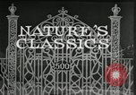 Image of Film Nature's Classics United States USA, 1920, second 11 stock footage video 65675031985