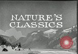 Image of Film Nature's Classics United States USA, 1920, second 13 stock footage video 65675031985