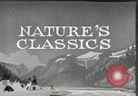Image of Film Nature's Classics United States USA, 1920, second 14 stock footage video 65675031985
