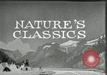 Image of Film Nature's Classics United States USA, 1920, second 15 stock footage video 65675031985