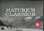 Image of Film Nature's Classics United States USA, 1920, second 16 stock footage video 65675031985