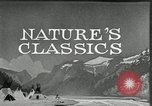 Image of Film Nature's Classics United States USA, 1920, second 17 stock footage video 65675031985