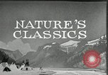 Image of Film Nature's Classics United States USA, 1920, second 18 stock footage video 65675031985