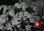 Image of Flower and garden show Seattle Washington USA, 1941, second 45 stock footage video 65675032026
