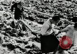 Image of Rice Paddy China, 1954, second 8 stock footage video 65675032179