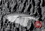 Image of lumbering United States USA, 1937, second 46 stock footage video 65675032221