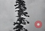 Image of lumbering United States USA, 1937, second 49 stock footage video 65675032221