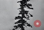 Image of lumbering United States USA, 1937, second 50 stock footage video 65675032221