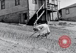 Image of people in rural area United States USA, 1935, second 44 stock footage video 65675032230
