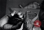 Image of African American artist Augusta Savage United States USA, 1937, second 47 stock footage video 65675032252