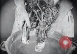 Image of preventing disease and cleansing raw food United States USA, 1922, second 28 stock footage video 65675032295