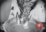 Image of preventing disease and cleansing raw food United States USA, 1922, second 31 stock footage video 65675032295