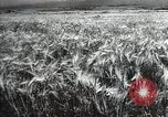 Image of new harvest Turkmenistan, 1949, second 8 stock footage video 65675032367