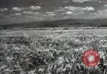 Image of new harvest Turkmenistan, 1949, second 10 stock footage video 65675032367