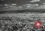 Image of new harvest Turkmenistan, 1949, second 11 stock footage video 65675032367