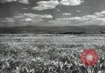 Image of new harvest Turkmenistan, 1949, second 15 stock footage video 65675032367