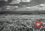 Image of new harvest Turkmenistan, 1949, second 16 stock footage video 65675032367