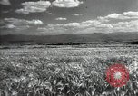 Image of new harvest Turkmenistan, 1949, second 17 stock footage video 65675032367