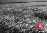 Image of new harvest Turkmenistan, 1949, second 21 stock footage video 65675032367