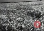Image of new harvest Turkmenistan, 1949, second 22 stock footage video 65675032367