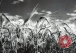 Image of new harvest Turkmenistan, 1949, second 25 stock footage video 65675032367
