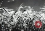 Image of new harvest Turkmenistan, 1949, second 26 stock footage video 65675032367