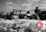 Image of new harvest Turkmenistan, 1949, second 35 stock footage video 65675032367