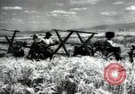Image of new harvest Turkmenistan, 1949, second 37 stock footage video 65675032367